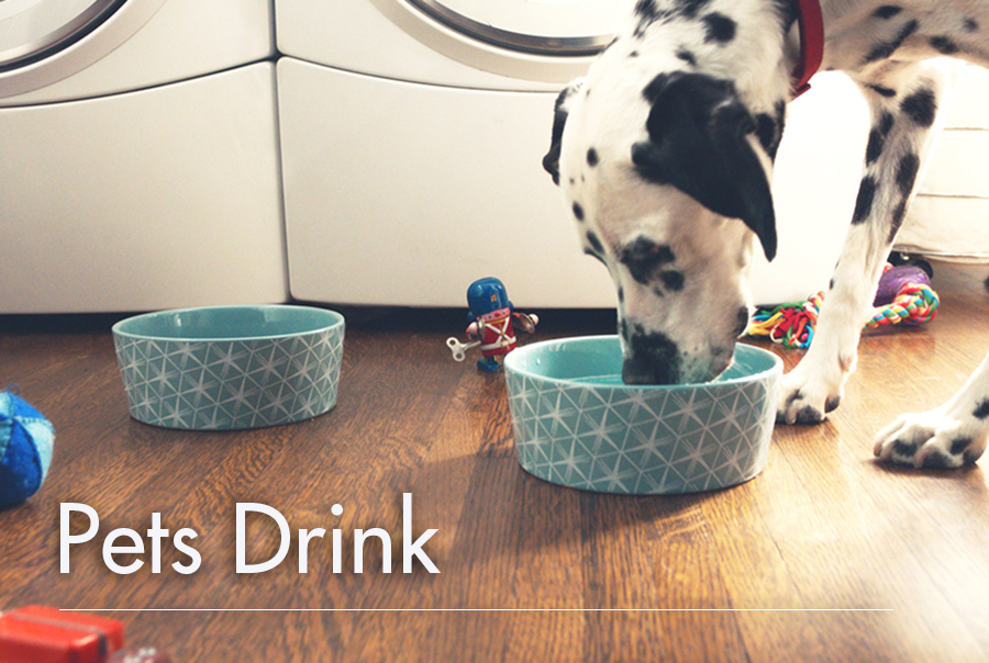 pets, drinking water, Culligan